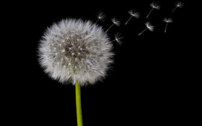 La Vida es Bella – Mi Experiencia con la Covid 19