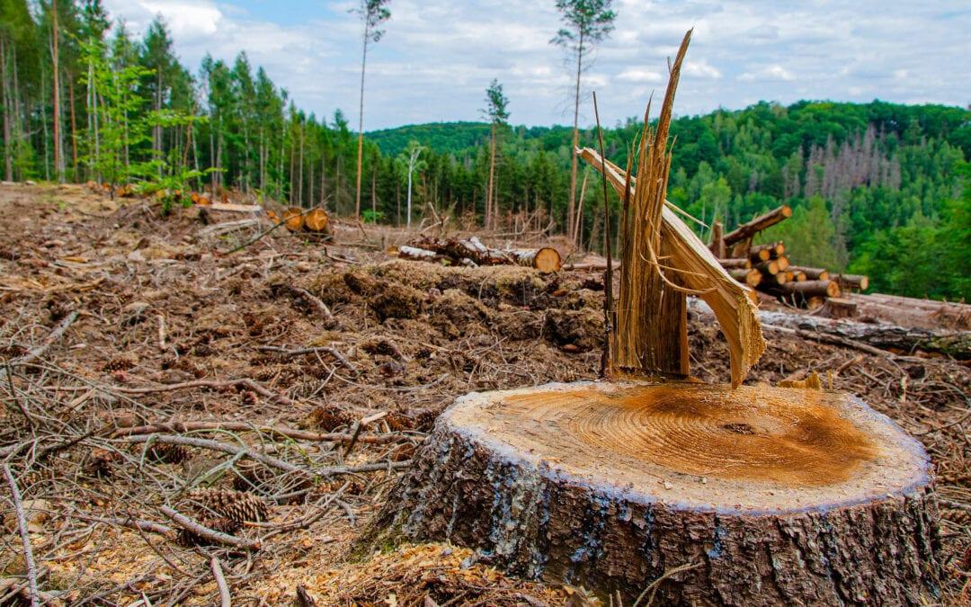 De pie con los árboles: Una respuesta de fe a la deforestación tropical