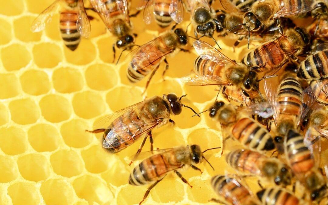 """Le projet """" Mediterranea """" sur la propriété de la Curie généralice.Objectif 2020 : ensemble pour la promotion de l'apiculture urbaine"""